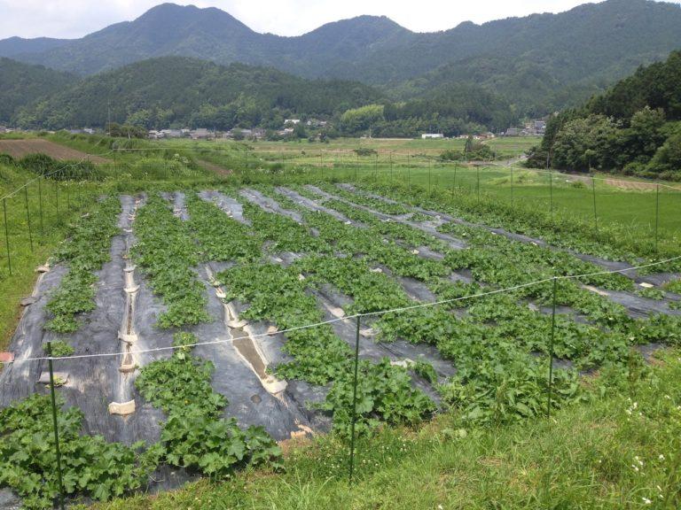 瀬尾谷瓜畑